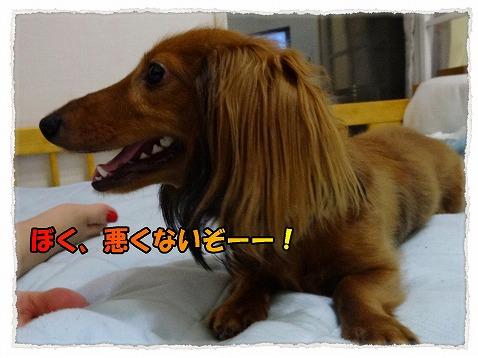 2013_7_27_5.jpg
