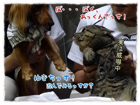 2013_7_30_5.jpg