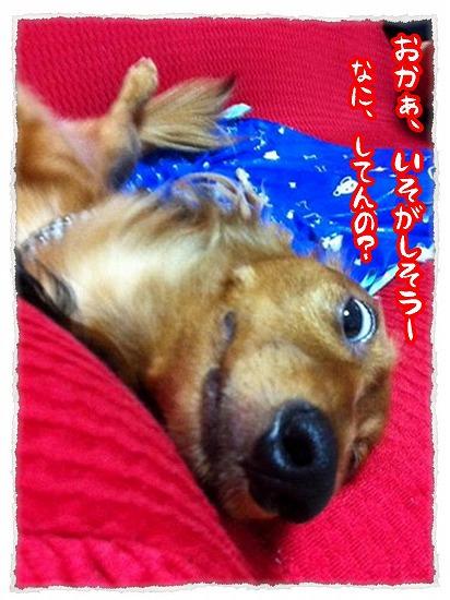 2013_8_10_11.jpg