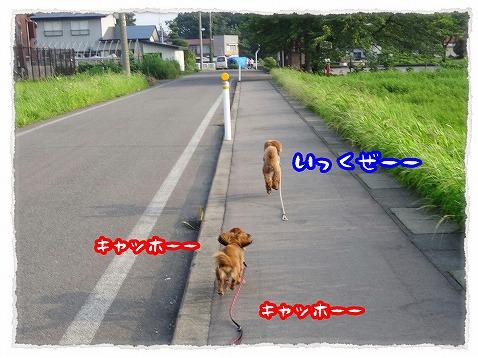 2013_8_20_3.jpg