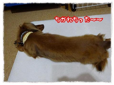 2013_8_5_11.jpg