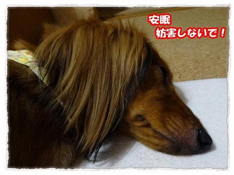 2013_8_5_3.jpg