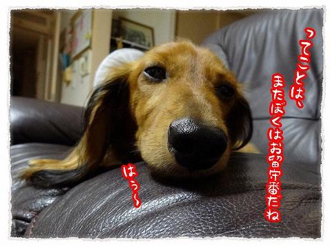 2013_9_10_2.jpg
