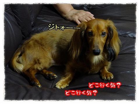 2013_9_12_3.jpg