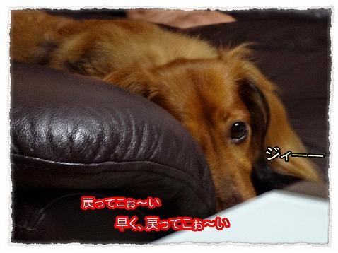 2013_9_12_4.jpg