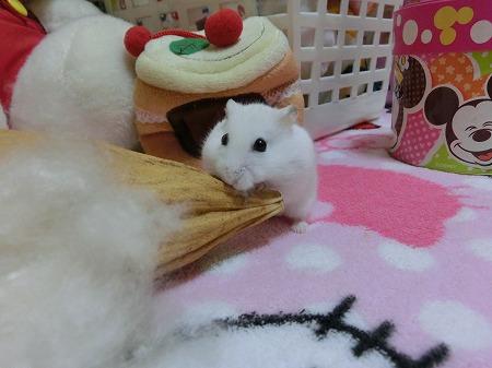 かわいいなぁ~(>_