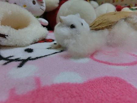 かわいいなぁ~(#^.^#)