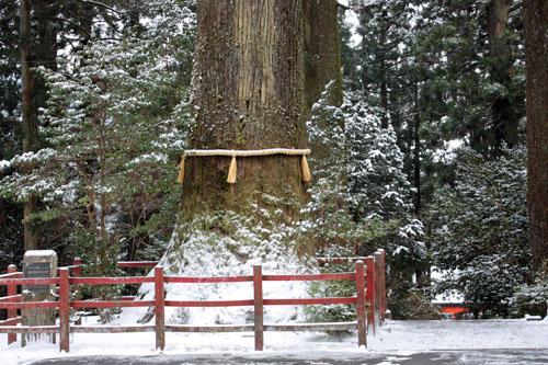 箱根神社 (9)