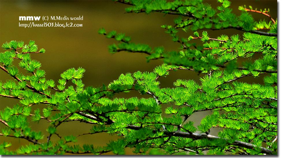 nikkou_1309_20130610224325.jpg