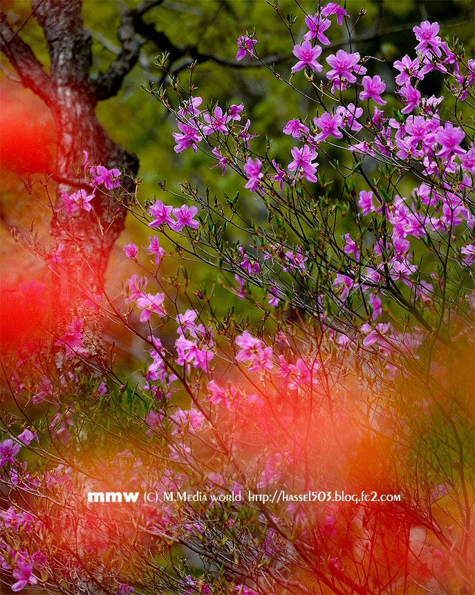 nikkou_1311_20130610224327.jpg