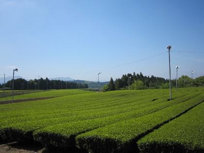 25茶園2