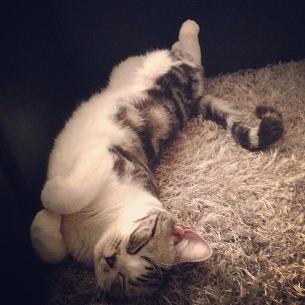 前田敦子の猫