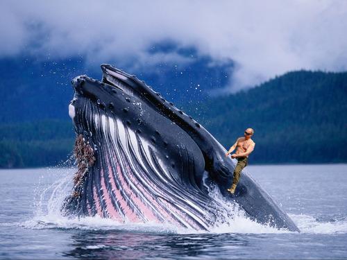 クジラに乗るプーチン大統領