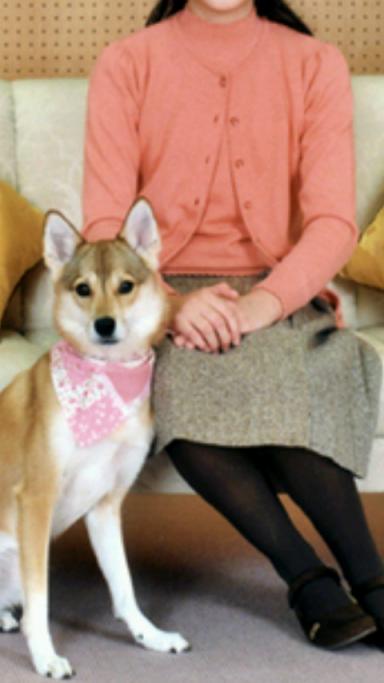 愛子様 愛犬