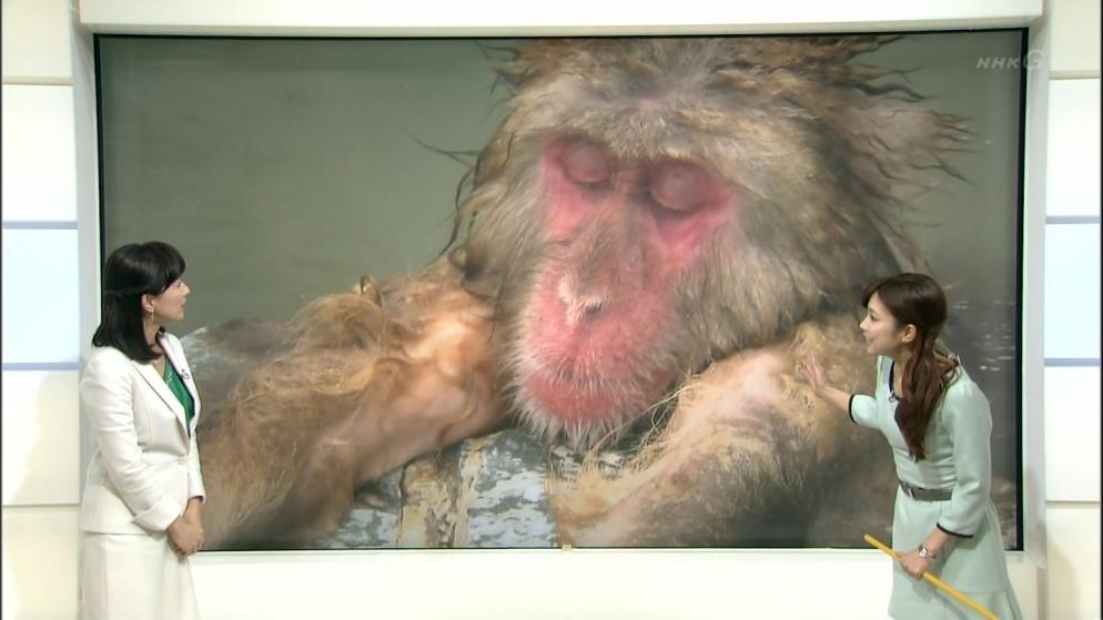 NHK 猿の入浴シーン