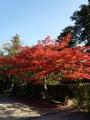 高山天満宮紅葉
