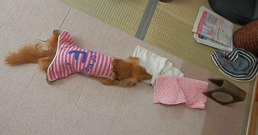 雛ちゃんの朝