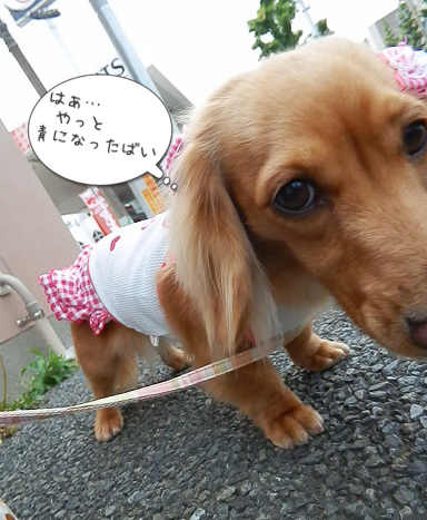 シャンプ~♪