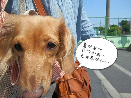 5月6日 雛ちゃんの遠足のお話
