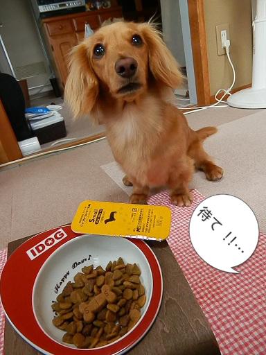 食べとぉなかぁ… どこ行ったとぉ?