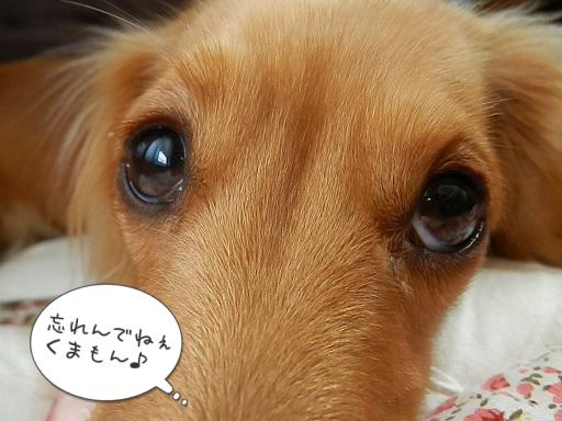 雛ちゃん、待ちぼぉ~けぇ~