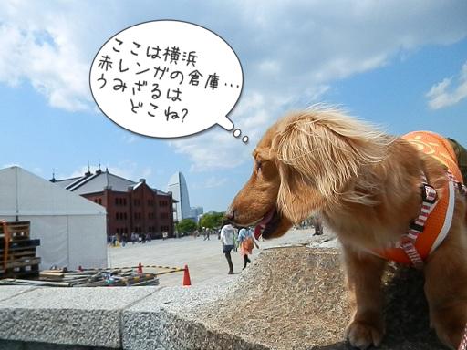 ここは横浜、赤レンガ倉庫… 海猿は何処ね?