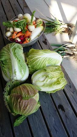 20140105野菜てんこもり