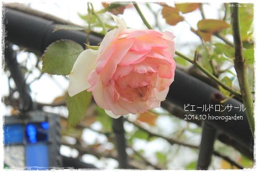 IMG_315211.jpg