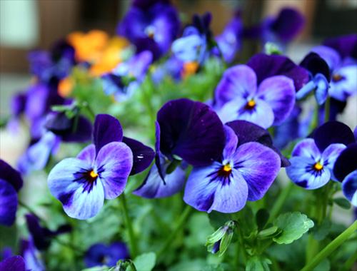 庭の花20130409 005