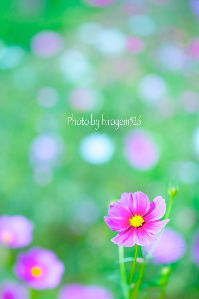 hiroyam526DSC_9230.jpg