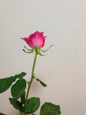 0510+004_convert_20130521121410.jpg