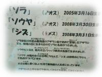 kako-3MelVc0jeLifTWh1_convert_20130507103334.jpg