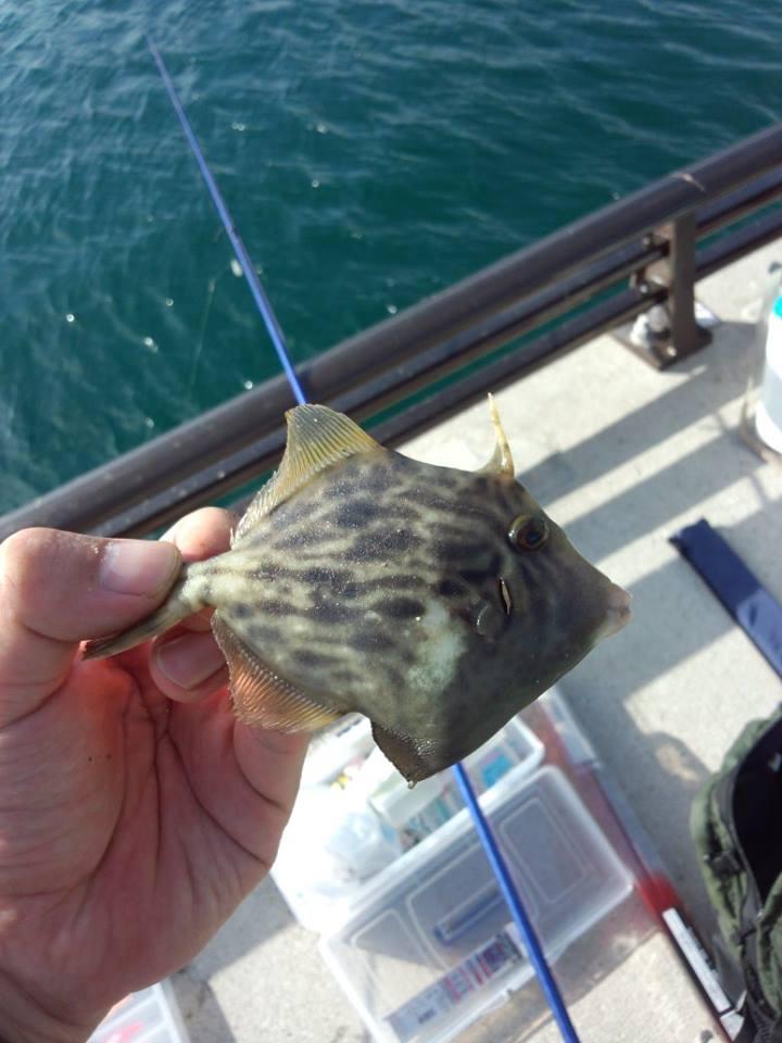 小さい魚しかいませんでした