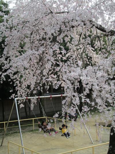 枝垂桜と子供