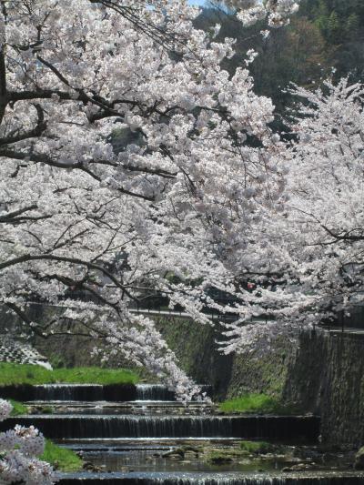 有馬の桜3