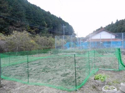 saku10_convert_20131115210607.jpg