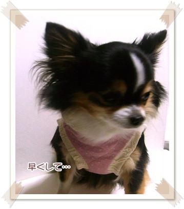 犬服*キルトパーカー3