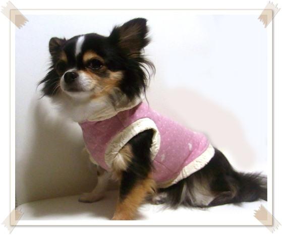 犬服*キルトパーカー4