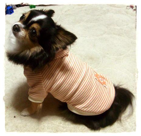 犬服*ボーダーパーカー5