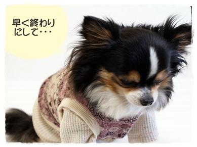 はぴベスト着画02