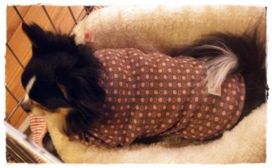 犬服*タートルシャツ03