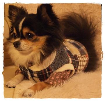 犬服*ブルックナーベスト04