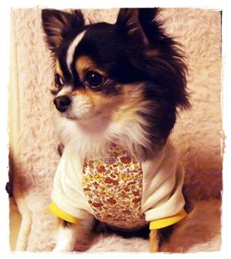 犬服*SBコルテのパーカー04
