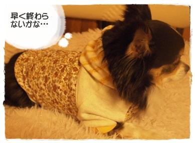 犬服*SBコルテのパーカー05