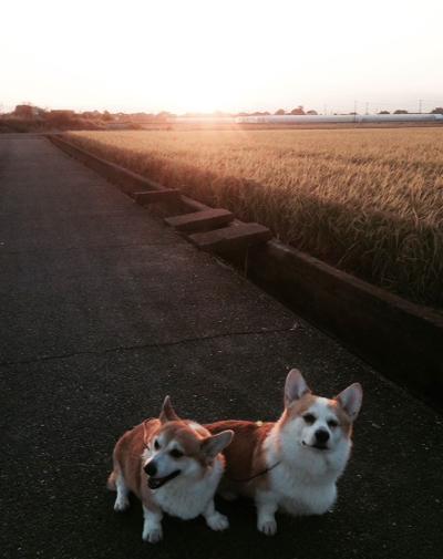2014朝の散歩