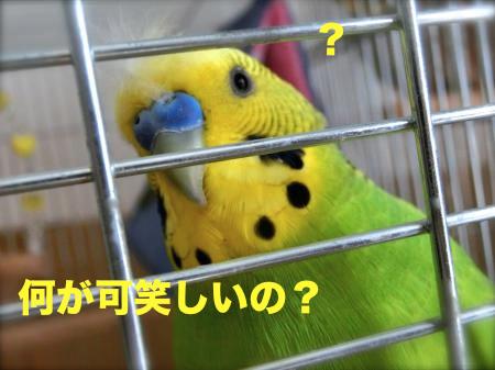 何が可笑しいの?