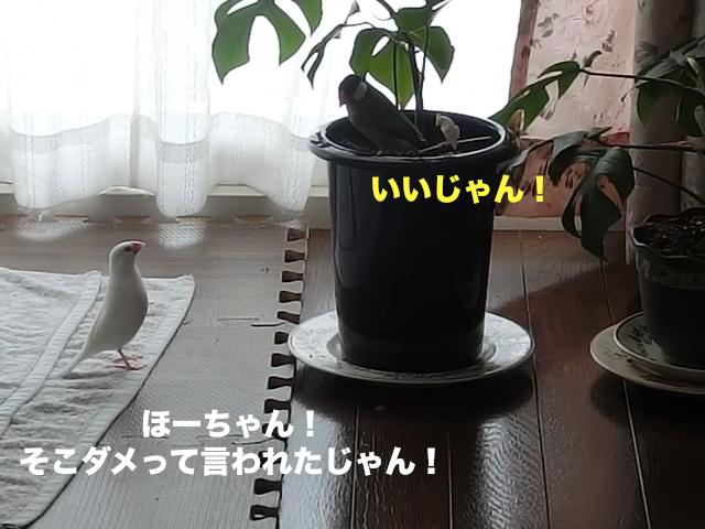いいじゃん!