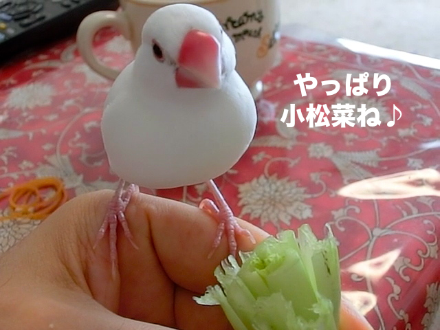 やっぱり小松菜♪