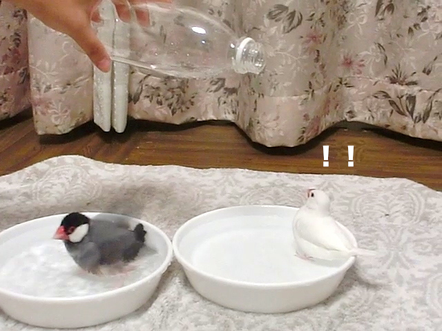打たせ水!!