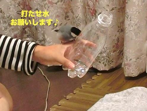 打たせ水お願いします♪